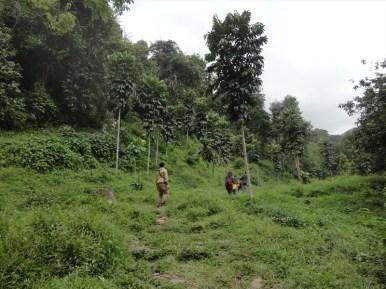 curug nangka taman nasional gunung halimun salak bogor (20)