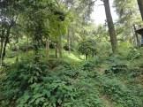 curug nangka taman nasional gunung halimun salak bogor (8)