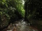 curug nangka taman nasional gunung halimun salak bogor (90)