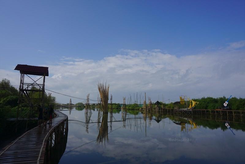 wisata hutan mangrove pantai jembatan api api kulonprogo yogyakarta (141)