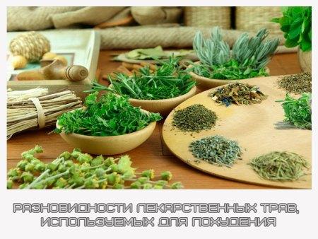 травы для похудения сжигающие жир фото