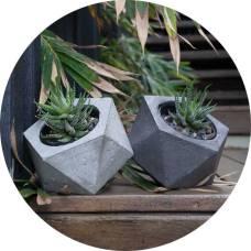Concrete pots - http://www.manplants.com.au