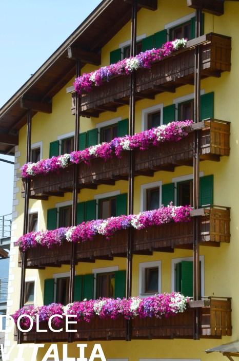 Predazzo is full of beautiful flowers