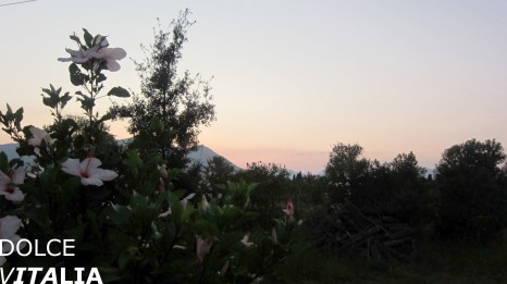 Pink Hibiscus of Orosei with pink sky