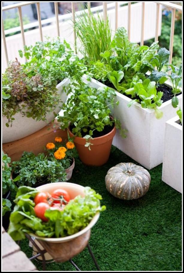 Tomaten Pflanzen Balkon Zeit