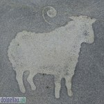 A Sheep - The Wool Trade
