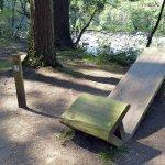 Tree Viewing Bench at Coed y Brenin