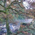 The Afon Mawddach, Tyn-y-Groes, Coed y Brenin
