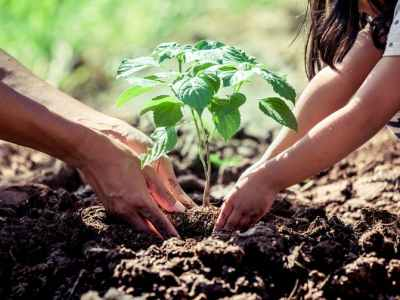 Tree Planting 2021