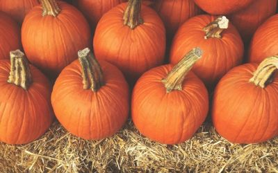 30 Fun and Cheap Things To Do With Your Family This Fall