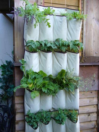 orto urbano con coltivazioni verticali