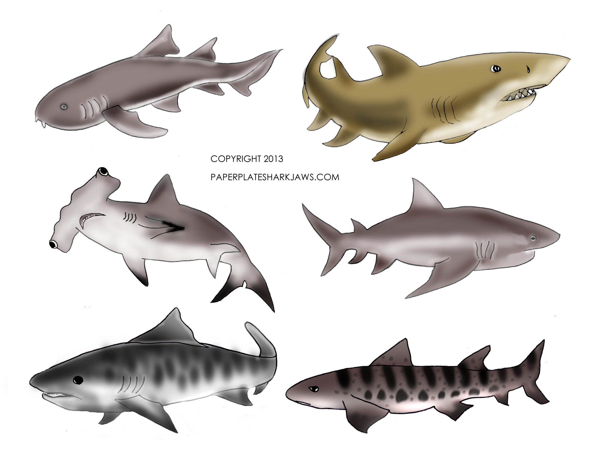 Shark Printable That Are Declarative