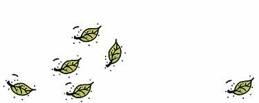 Zugluft - Blätter