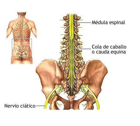 El vértigo el departamento de pecho de la columna vertebral