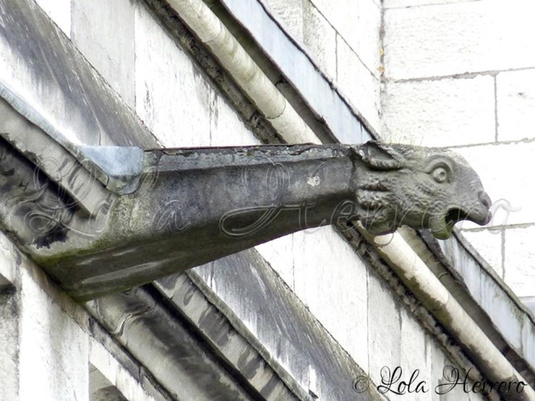 Gárgola Catedral Cork (Irlanda) 147