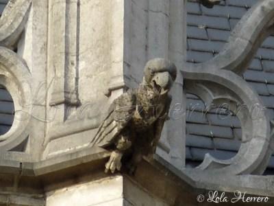 Gárgola de la Catedral de Bruselas (Bélgica)
