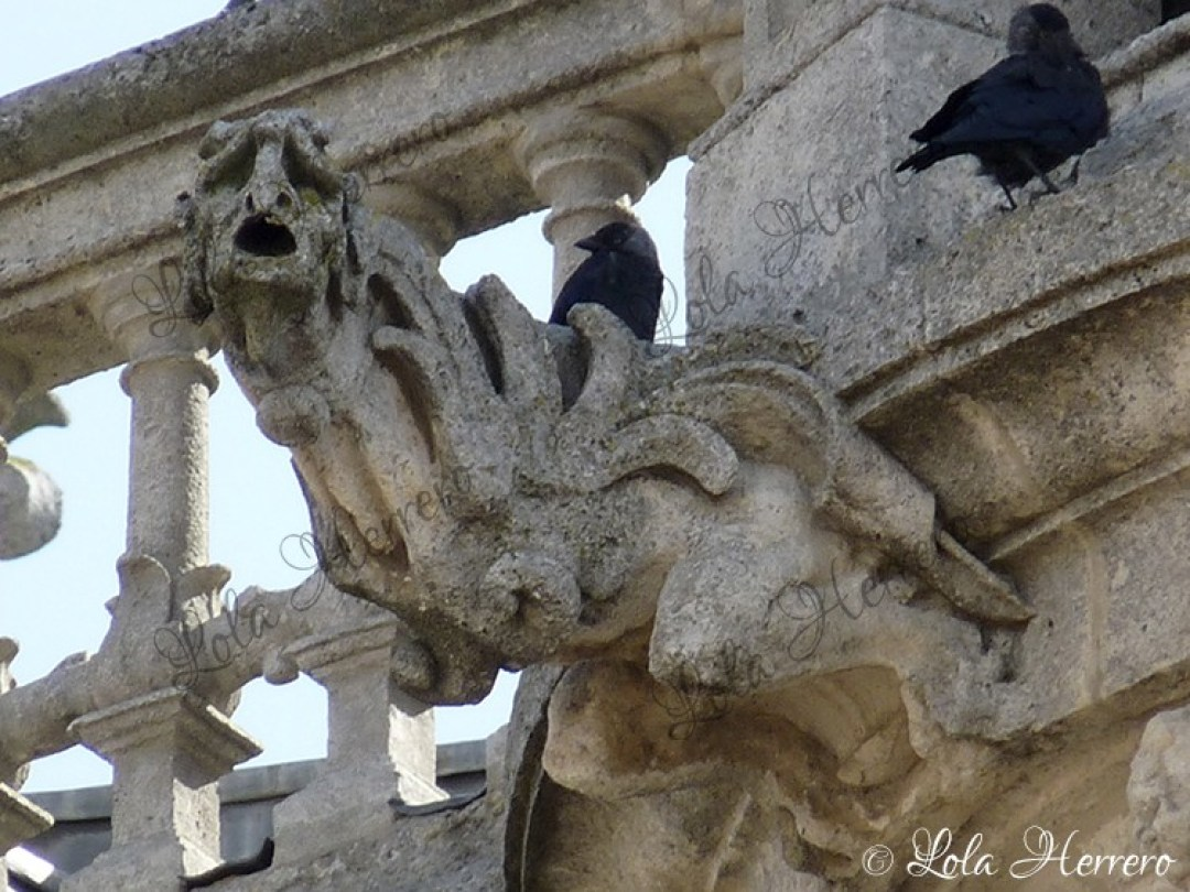 Gárgola Catedral Burgos (335)