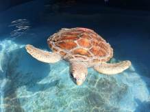 Dolphin Marine Animal Rehabilitation Trust