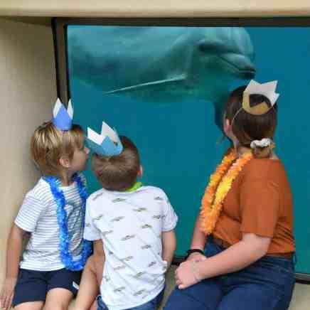 Birthday Party At Dolphin Marine