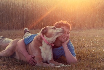 Realizing the Indicators of Your Pet's Wellness is Key to Protecting it Wholesome