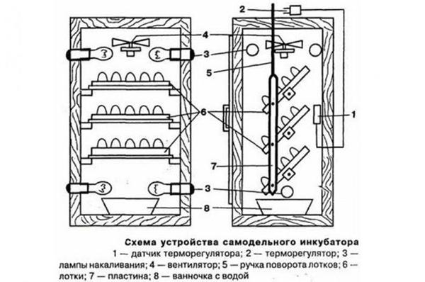Mechanismus der Erregung von Eiern