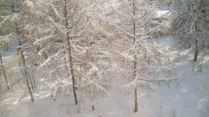 Солнышко пробивается сквозь деревья...