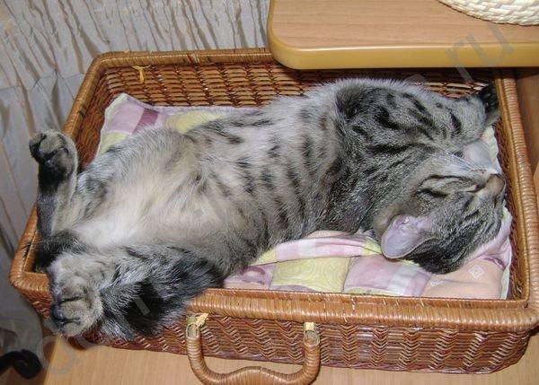 Основные причины почему кот не ест и пути решения проблемы