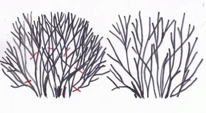 Подкормка жасмина осенью