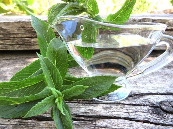 frunze de menta pentru pierderea in greutate burner de grăsime kevin zahri