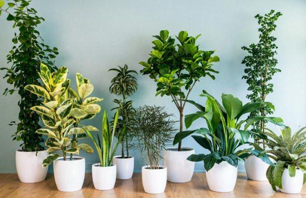 Комнатные нецветущие растения: фото с названиями и уход за ...