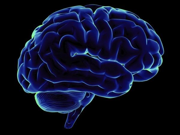 Структура мозга