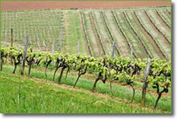 Les vignes du Domaine de Bilé