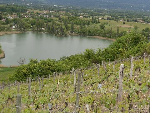 Parcelle de Jacquere au dessus du lac St André