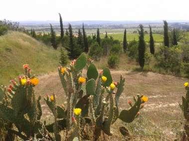 Photos- Cactus