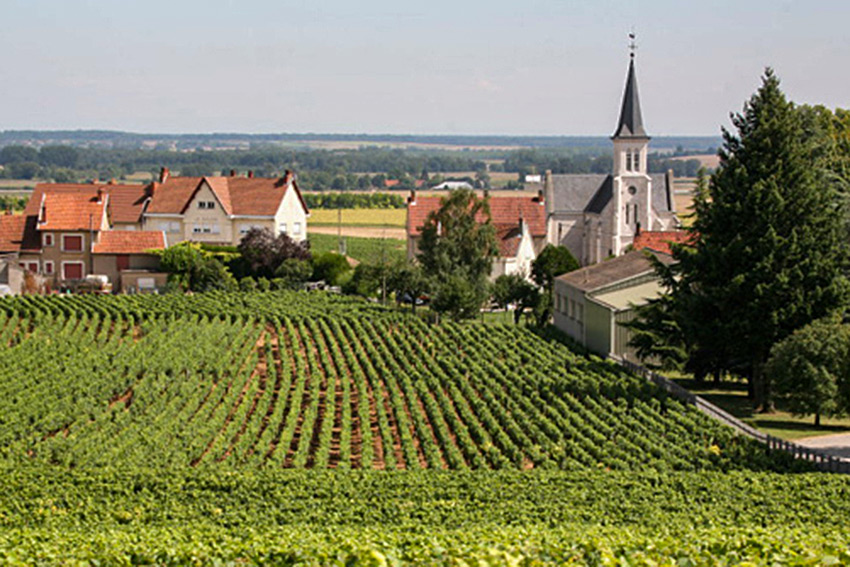 the cote de nuits great wines in a
