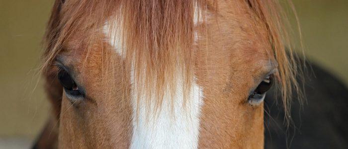 Xrace aventure Paddock paradise grand gîte bédoin location vacances mont ventoux chevaux nature campagne piscine randonnée équestre ventoux sud dressage garde ranch jument terrain