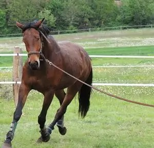 cabane-equitation-domaine-des-vaulx