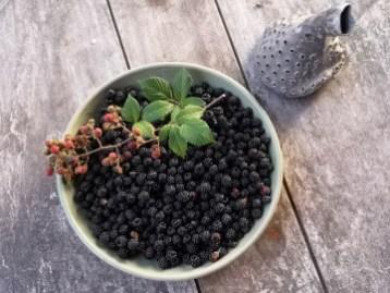 Blackberry Orangery