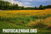 PhotoCalendar.org, domain name for sale