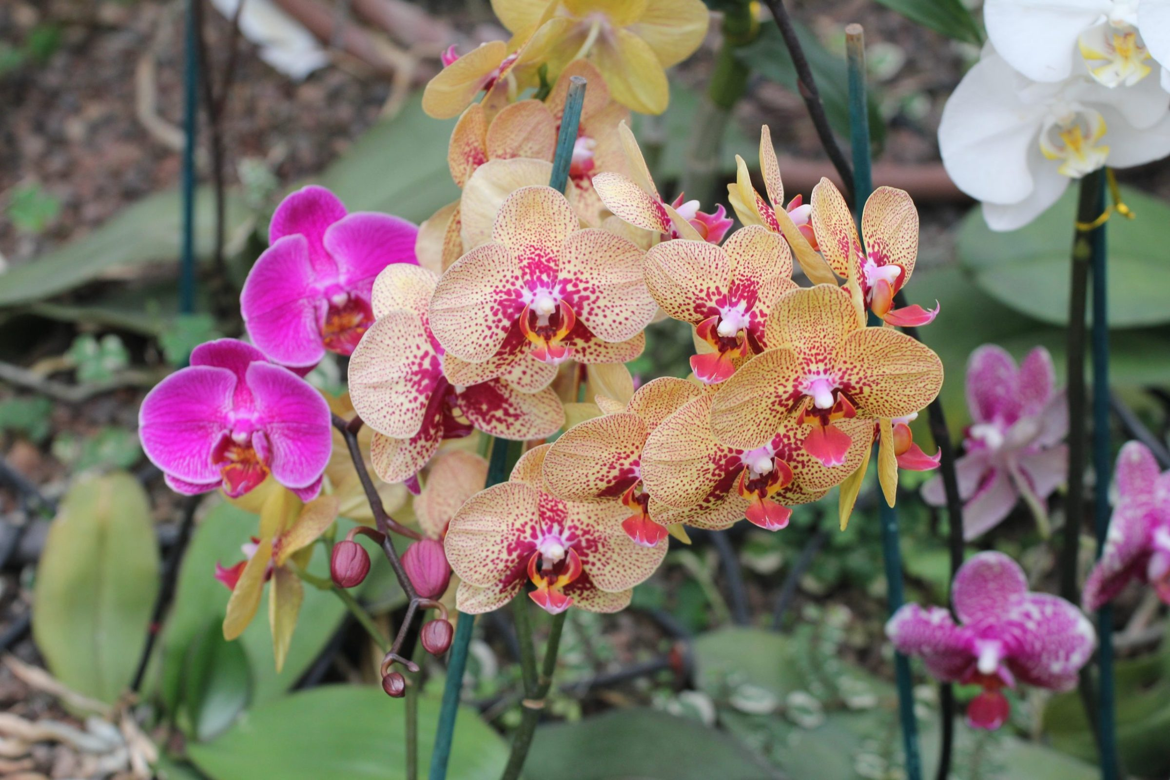 OrchidSociety.org, domain name for sale