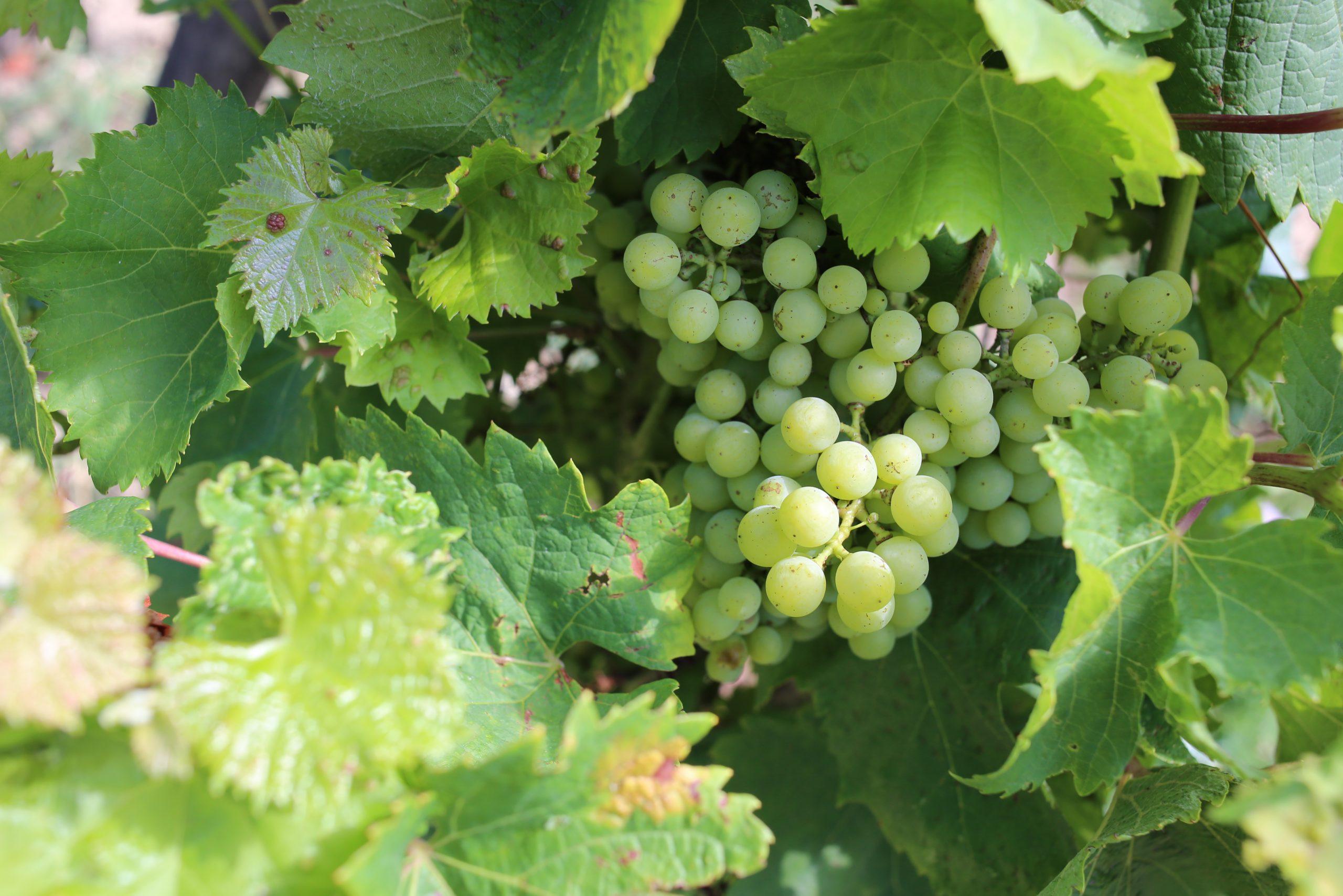Wine Relais