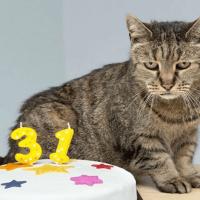 5 признаков старости у кошек