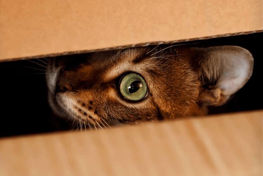Как понять, что кошка умирает