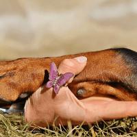 8 проблем с собачьими лапами