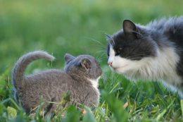 Пять мифов о кошках 5