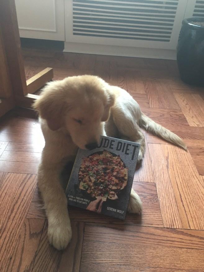 dude-diet-puppy