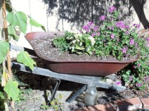 Dad's garden DIY: make a planter out of a tired wheel barrel.