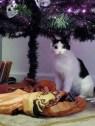 cat under halloween tree