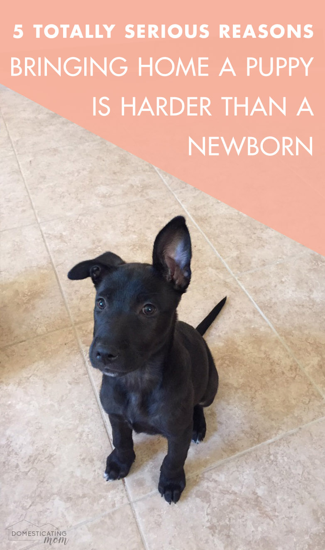5 Ways Bringing Home a Puppy is Harder than Bringing Home a Newborn