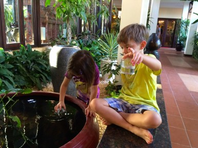 The kids catching guppies in the morning, giving us time to finish our breakfast
